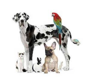 companion-animal