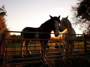 Horses_Costwolds