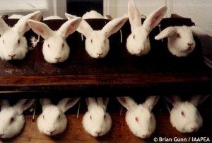 rabbits-draize-testing